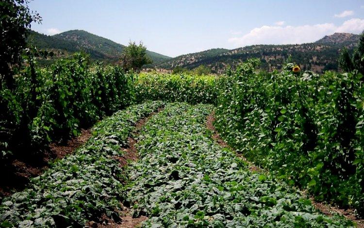 Bir Salatalık Çiftçisinin Yapay Zeka İle Yapabilecekleri!